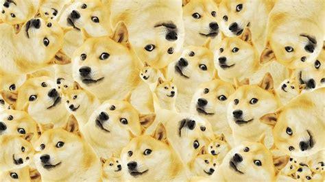 Dog Meme Wallpapers Wallpaper Cave