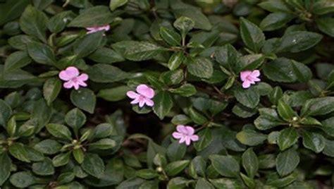 annual plant definition top 28 annual plant definition what is an annual perennial biennial ten annual flowers to