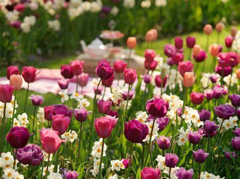 bulb planting ideas a festive border idea for your mid late spring garden