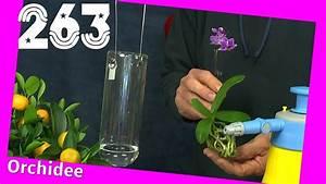 Anthurie Im Wasser : pflanzen ohne erde nur wasser ostseesuche com ~ Yasmunasinghe.com Haus und Dekorationen