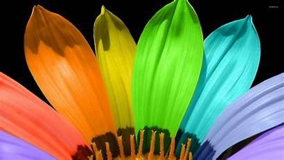Petals Different Flower Colored Wallpapers Digital Barbie