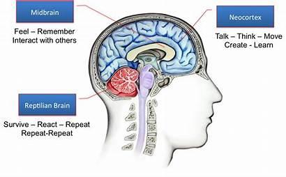Google Brain Neocortex Nl Reptilian