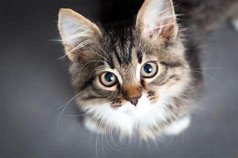 katzenbilder die 30 tollsten bilder katzen