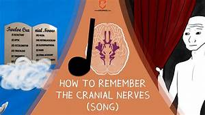 How To Remember The Cranial Nerves  Song