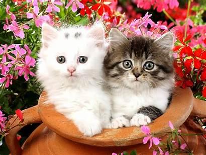 Kitten Wallpapers Kittens Cat Flower Fluffy Cats