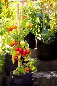 les 20 meilleures idees de la categorie petit potager sur With amazing idee deco jardin contemporain 3 jardin urbain contemporain ustensile jardinage mini