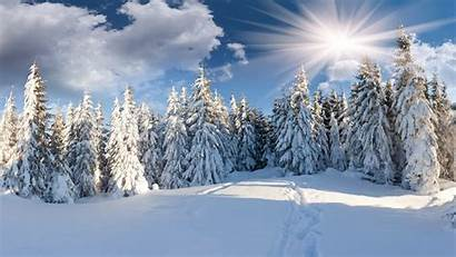 Winter Forest Sunshine Snow Tree Background Wallpapers