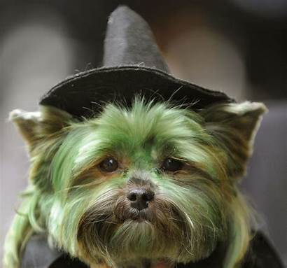 Terrier Yorkshire Halloween Dog Costumes Face Square