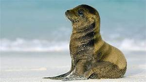What is a baby sea lion called? | Reference.com
