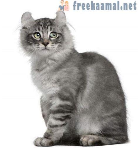 Top 10: retas un neparastas šķirnes Kaķu