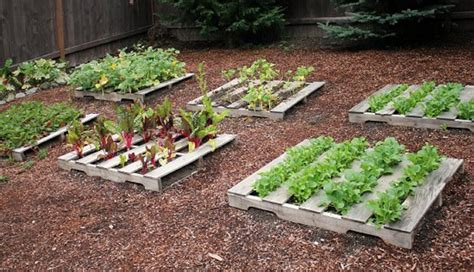 pallet vegetable garden pallet ideas recycled