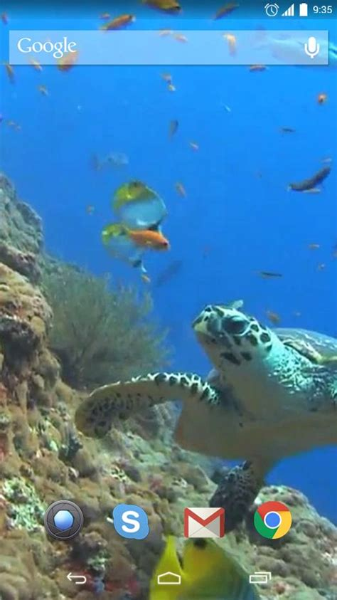Download Sea Turtle Live Wallpaper Gallery