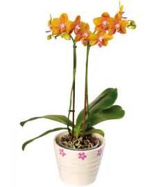 wholesale fresh flowers jl fresh wholesale flowers plants