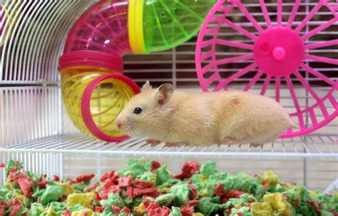 Hamster Bedding Petsmart by Healthy Pet S Carefresh 174 Colorful Creations Brings Living
