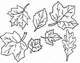 Coloring Printable Leaves Pages Leaf Outline Popular sketch template
