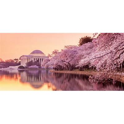 Let us book your trip to the National Cherry Blossom