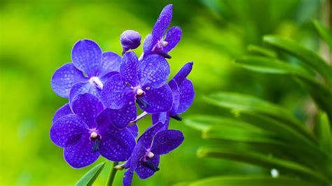 Hd Wallpapers 1080p Widescreen Flowers