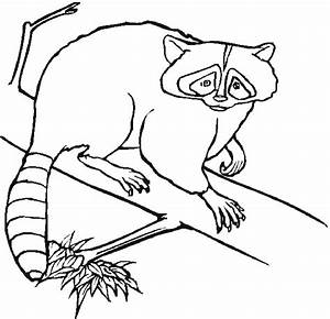 Free coloring pages of forest animals