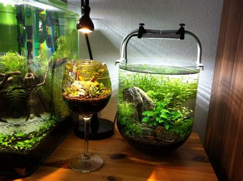 Aquascape Designs Products by Wine Glass Aquascape Brilliant Cool Tank On The Right
