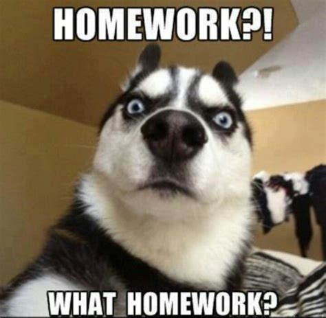 Homework Memes - 57 best homework memes images on pinterest quote school and college life