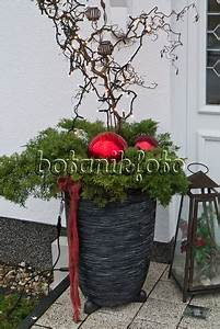 Eingangsbereich Außen Dekorieren : bild weihnachtlich geschm ckter hauseingang 483055 bilder und videos von pflanzen und g rten ~ Buech-reservation.com Haus und Dekorationen