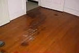 how to remove dog urine stains from hardwood floors ehow