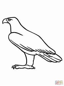 Disegno di Aquila reale da colorare Disegni da colorare