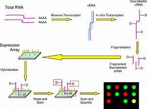 Flow Diagram Showing The Process Of Labelling Dna