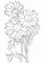 Daisy Coloring Flower Worksheets K5 July sketch template