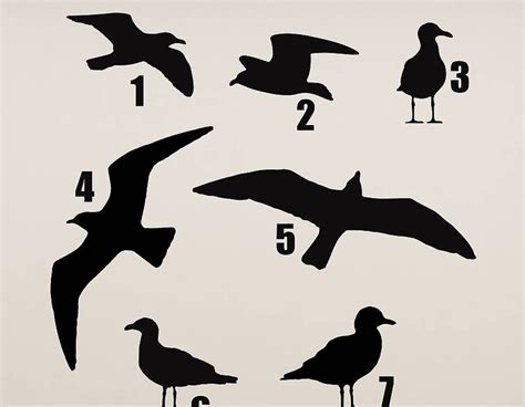 seagull vinyl wall sticker contemporary wall stickers