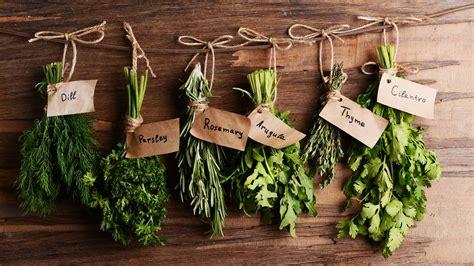 6 best easy to grow plants for your indoor herb garden year