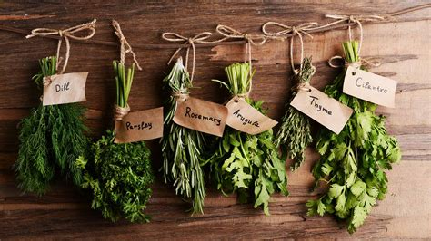 6 Best Easy to Grow Plants for Your Indoor Herb Garden (Year Round)