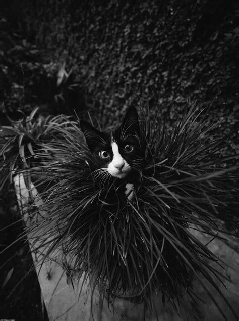 「可愛いネコ」とは違った魅力。猫をモノクロで撮ってみた20選  笑うメディア クレイジー
