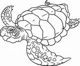 Coloring Ocean Printable Popular sketch template