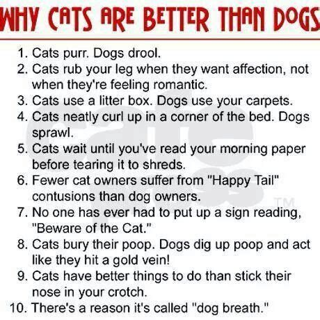 dogs cats better why than dog then cat hate story babies funny palmtalk wiley dakota via