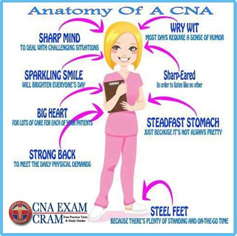 Cna Exam Clinical Skills Test Study Guide  Cna Exam Cram. Resume Templates Samples Free. Abroad Resume Format Sample. Us Format Resume. How To Sell Yourself In A Resume Examples. How To Send Resume By Email. Resume Format Examples For Students. How To Make A Quick Resume For Free. College Recommendation Resume