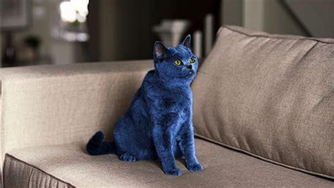 forget   dress  color   cat catster