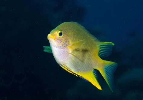 fish  recognize faces  surprisingly human skill