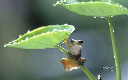 Bing Wallpapers Frog Taro Climbing Plant Pixelstalk