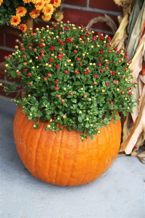 ways to decorate pumpkins 10 ways to decorate a pumpkin under 10