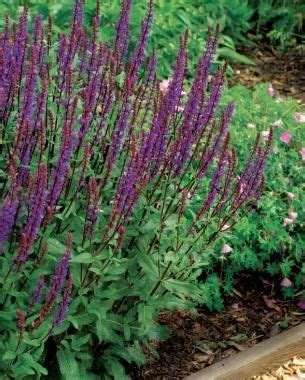 best hardy plants for borders 241 best images about flower borders on pinterest grasses garden borders and shrubs