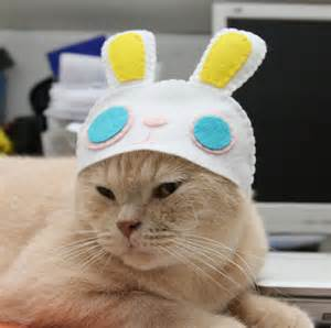 cat hat cats in the hats 15 hilarious pictures kitty bloger