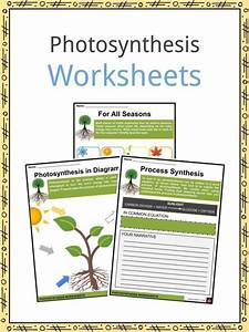 Photosynthesis Diagrams Worksheet Answers Synthesis Facts