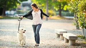 Professional dog walking and pet sitting ocean walk pet for Professional dog walking service