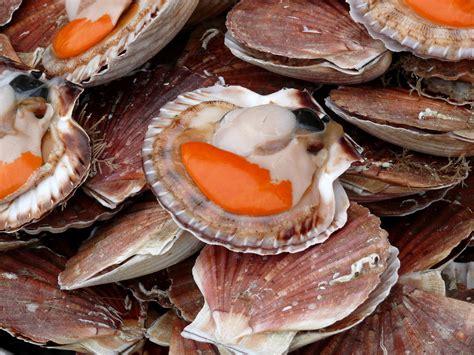 cuisiner le corail de jacques recettes de jacques et de safran