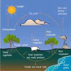 Define Carbon Sink Forest by The Carbon Cycle 171 Mr Calaski