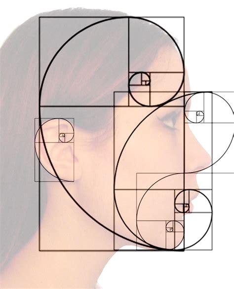 golden proportion in design the golden ratio in 3d human face modeling valentin schwind