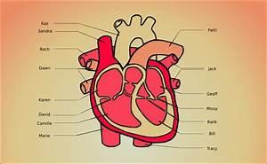 My Heart  Diagram