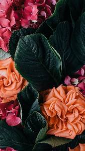 Vintage floral iPhone Wallpaper Collection | Preppy Wallpapers