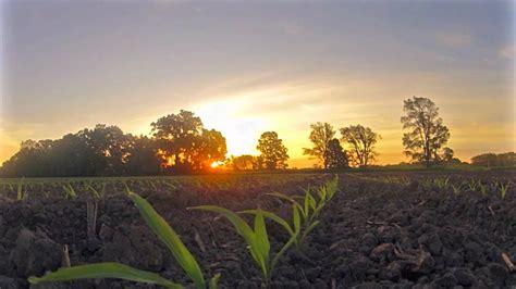 early corn field sunrise time lapse youtube